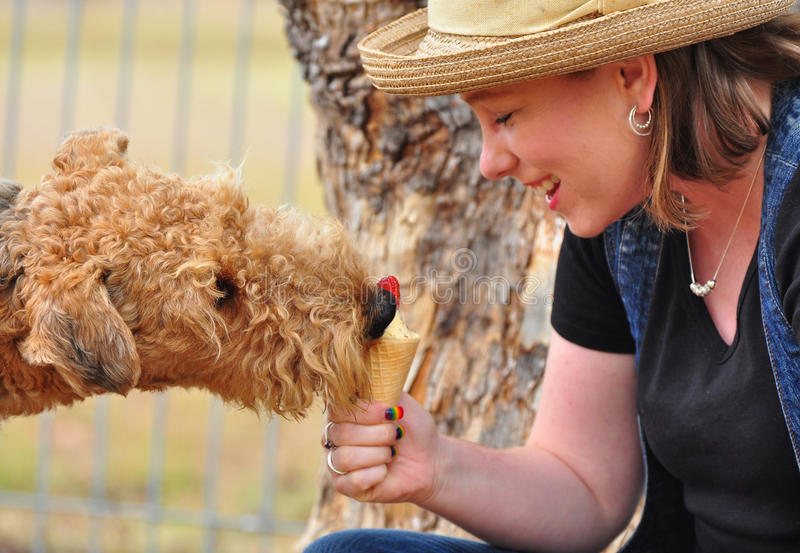 Funny Airedale dog eating cold strawberry icecream stock photography