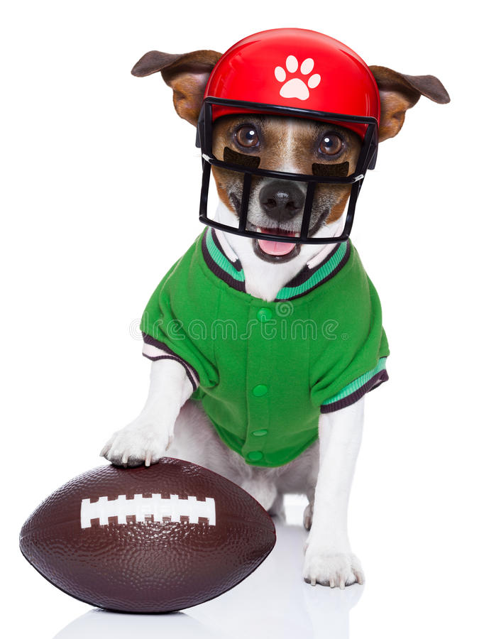Funny american football rugby dog stock photos