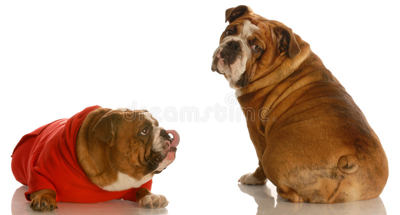 Funny animal behavior royalty free stock photos