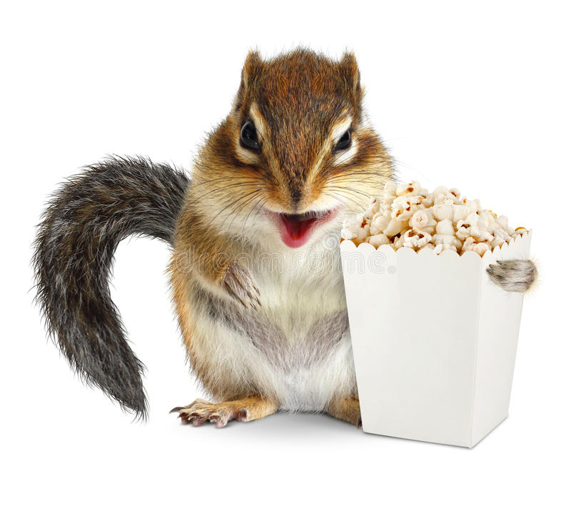 Funny animal chipmunk with blank popcorn bucket isolated on whit royalty free stock image