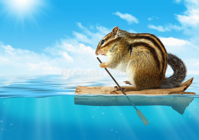 Funny animal, chipmunk floating at ocean, travel concept royalty free stock image