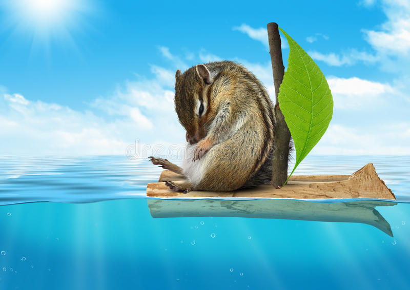Funny animal, chipmunk floating at sea, voyage concept stock photo