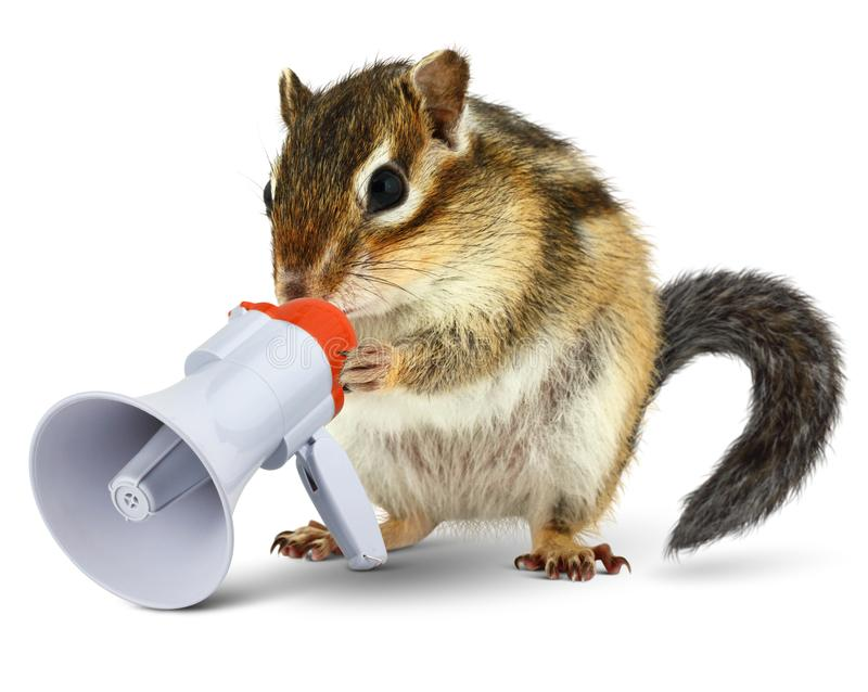 Funny animal chipmunk talking into megaphone. Isolated on white stock image