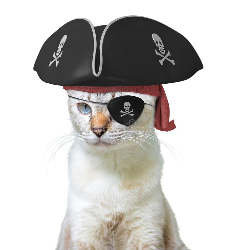 Funny animal costume of a cat pirate captain wearing a tricorn hat and eyepatch with skulls and crossbones, isolated on a white ba stock images