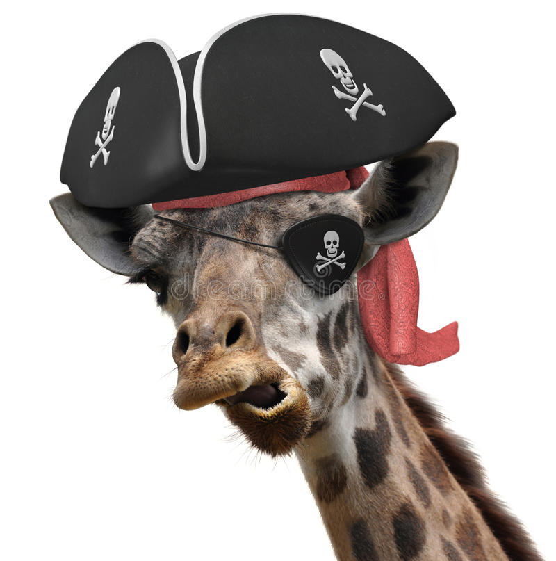 Funny animal picture of a cool giraffe wearing a pirate hat and eyepatch with crossbones stock images