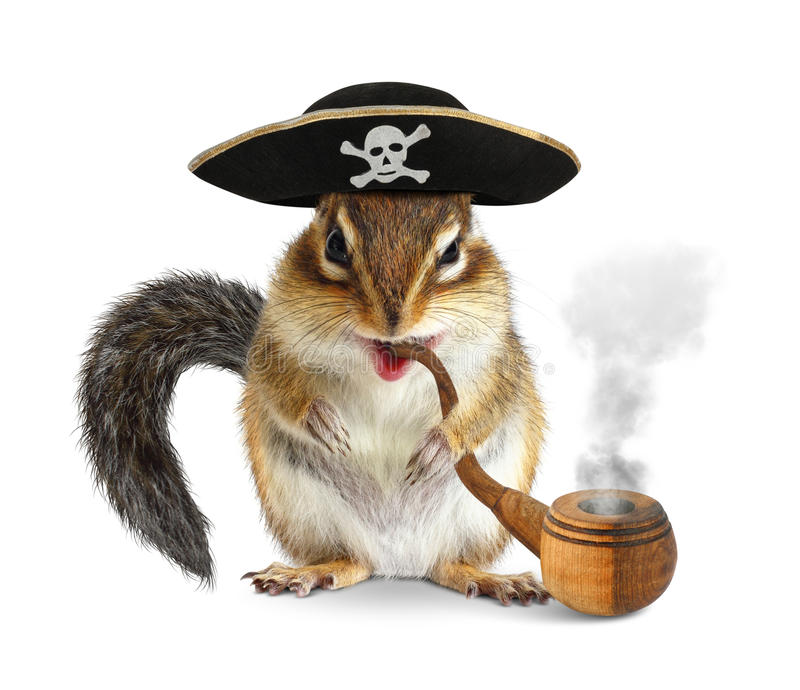 Funny animal pirate, chipmunk with pipe and filibuster hat isolated on white. Funny animal pirate, chipmunk with pipe and filibuster hat on white stock photography