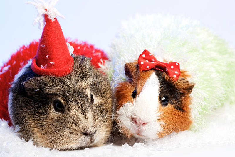 Funny Animals. stock photos