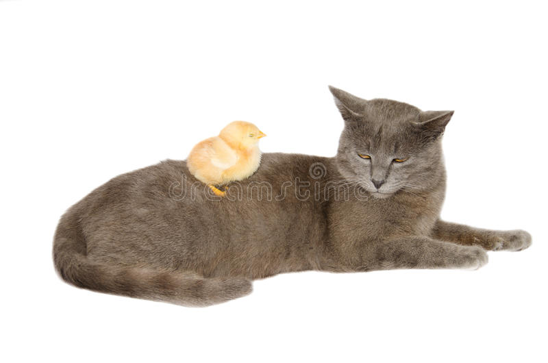 Funny animals. Photo of two funny animals isolated on white stock photography