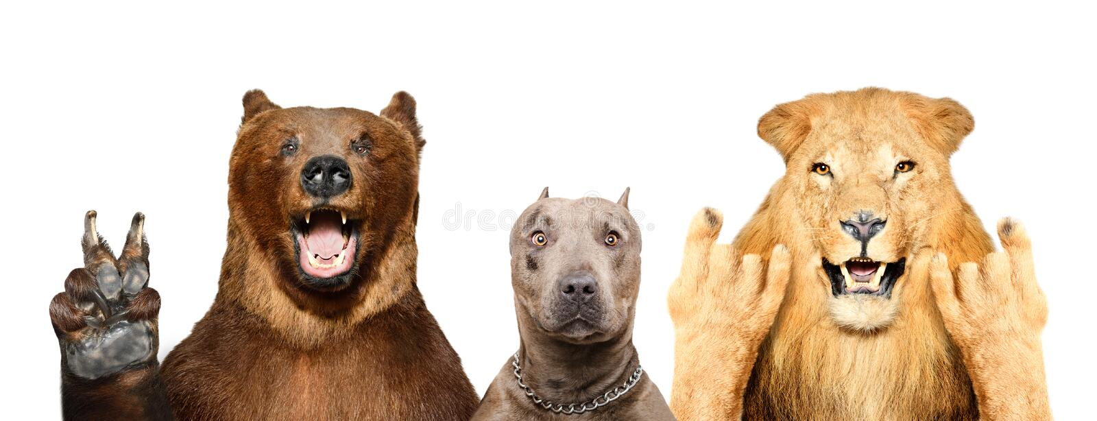 Funny animals showing gestures. Isolated on white background stock photography