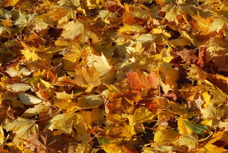 Funny autumn stock photography