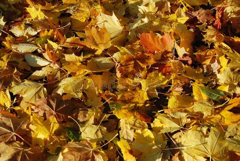 Funny autumn stock image