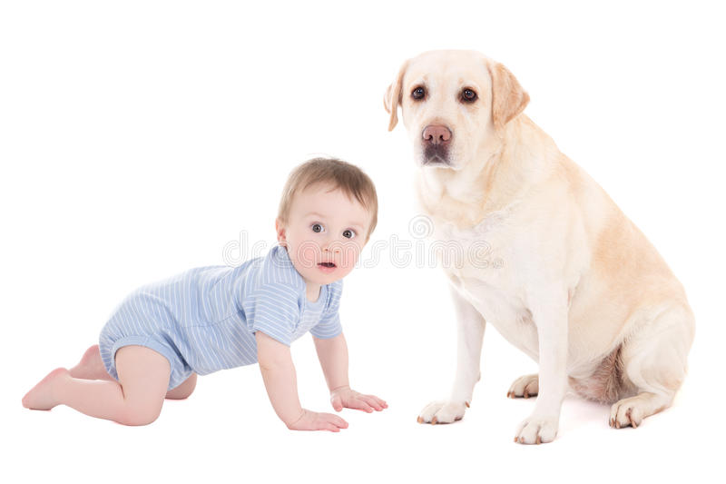 Funny baby boy and beautiful dog golden retriever sitting isolated on white. Background stock photography