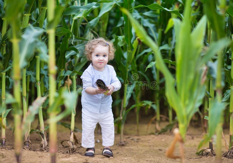 Funny baby girl and hiding in a corn field stock image