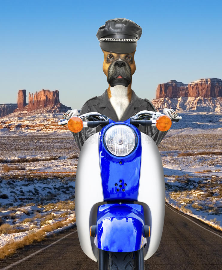 Funny Biker Dog, Motorcycle, Riding. Illustration of a funny biker dog out on the road riding his motor scooter or motor cycle stock photos