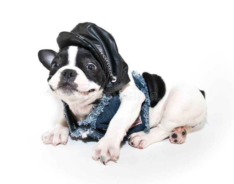 Funny Biker Puppy stock image