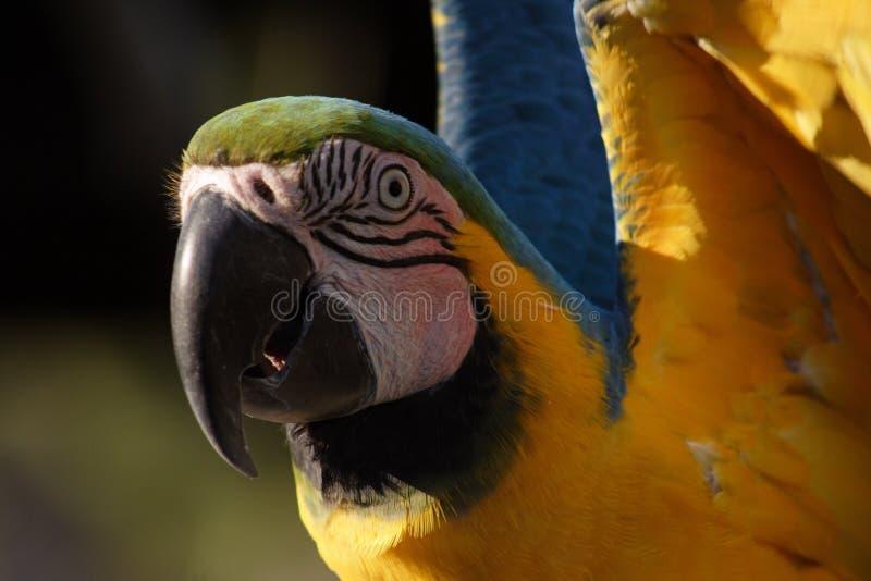 Funny bird royalty free stock image