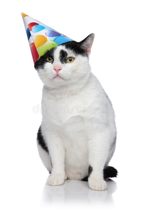 Funny birthday cat with cap sliding off head stock photo