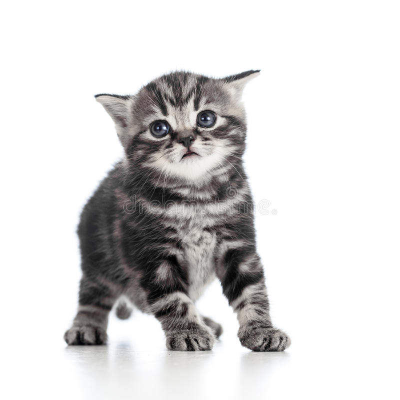 Funny black cat kitten on white
