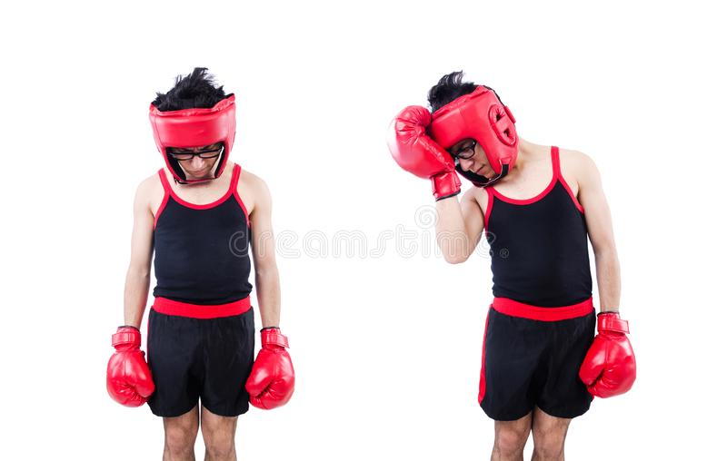 Funny boxer isolated on the white background stock photo