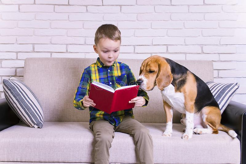 Funny boy reading a book with a beagle. Dog on the couch stock photo