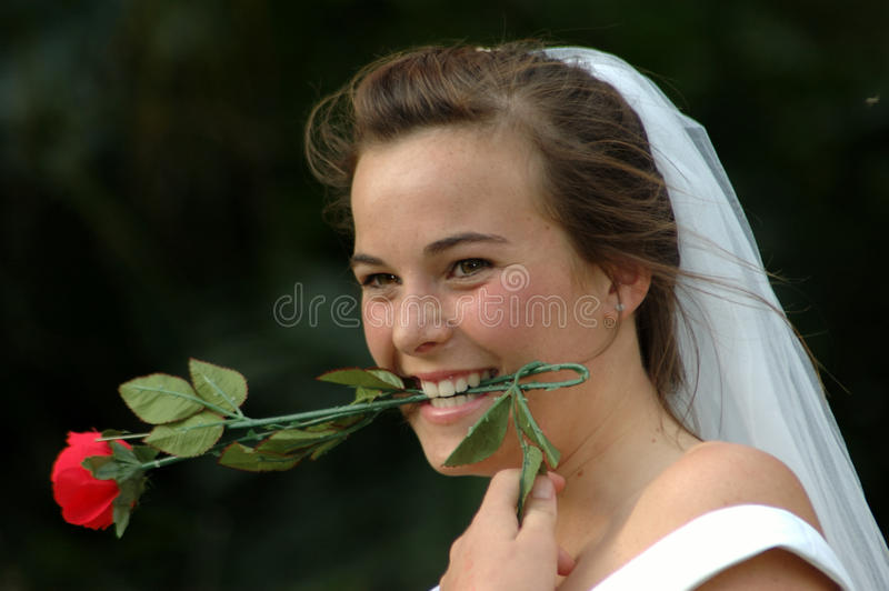 Funny bride. A beautiful young brunette Caucasian bride head portrait with funny expression in her face holding a red rose with her white teeth