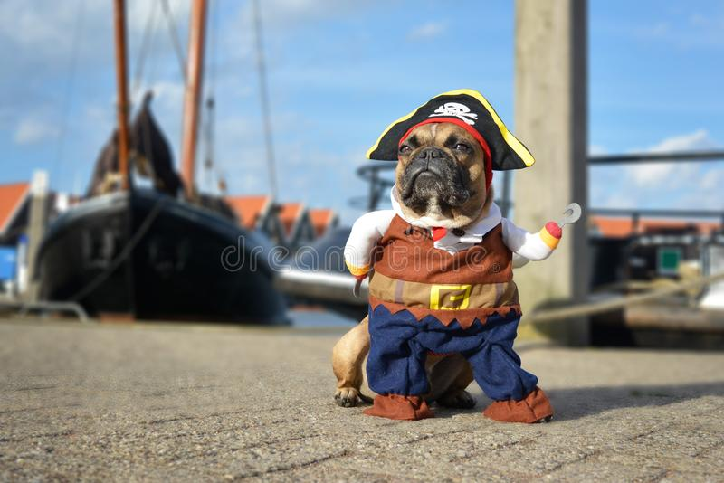 Funny brown French Bulldog dog  dressed up in pirate costume with hat and hook arm standing at harbour with boats in background stock photography