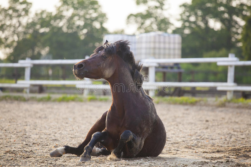 Funny brown horse royalty free stock photos