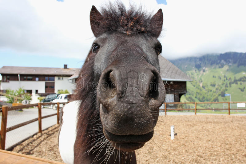 Funny  brown horses at farm