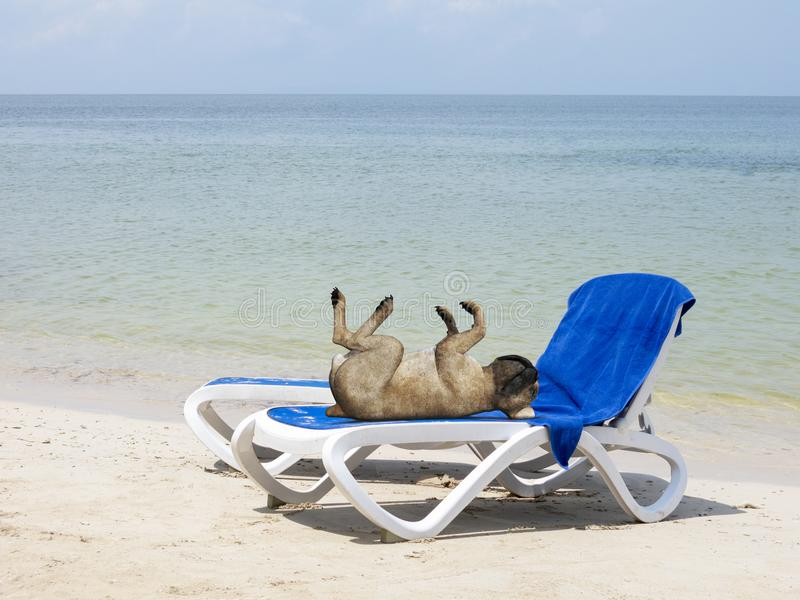 Funny Sun Tan Beach Dog royalty free stock photography