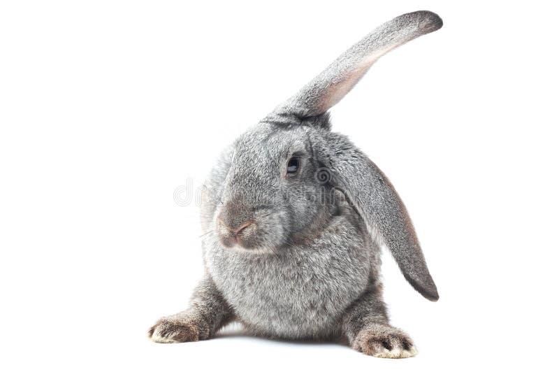 Funny bunny stock photography