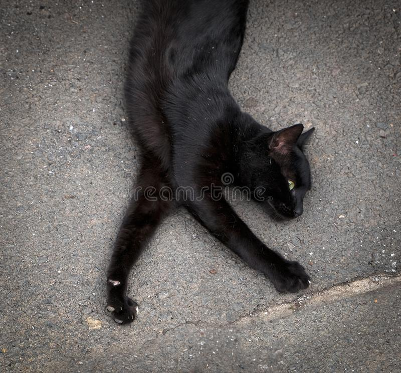 Funny cat. Animals from Madeira. Funny cat. Black cat. Animals from Madeira. Portugal stock photos