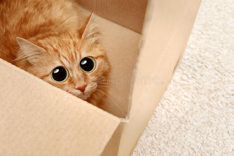 Funny cat with big eyes hiding in cardboard box stock photos