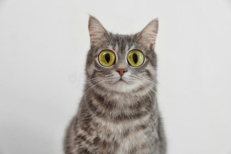Funny cat with big eyes on light background stock photography