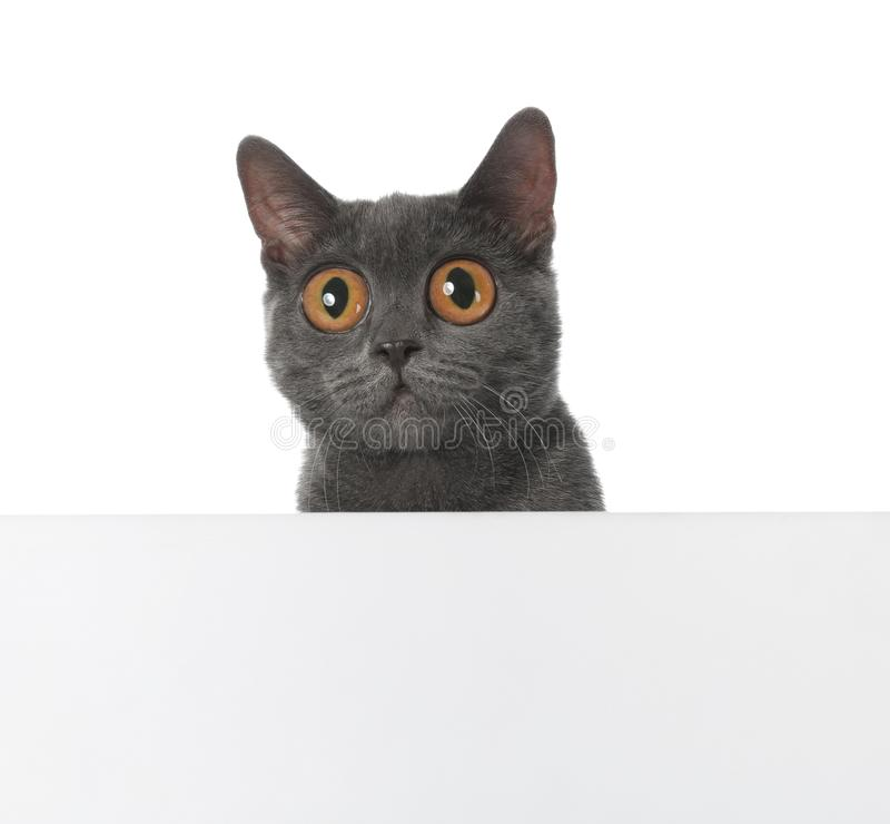Funny cat with big eyes and space for design stock photo