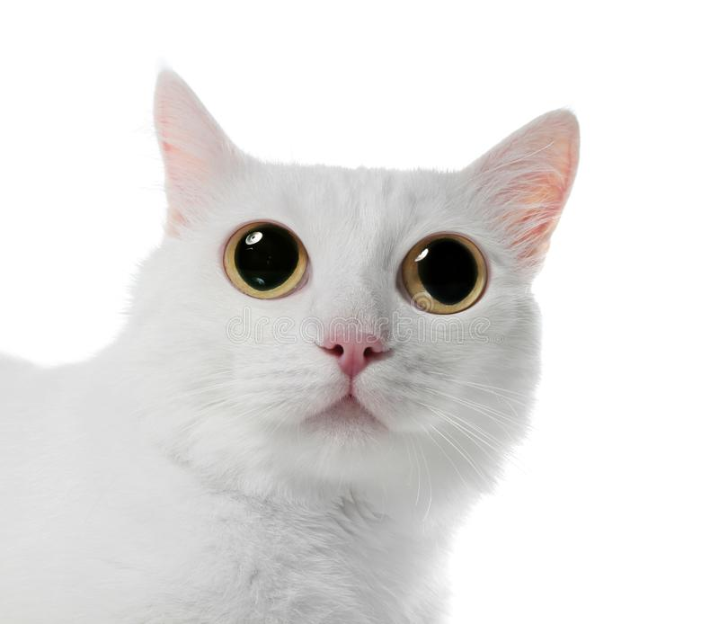 Funny cat with big eyes on white background stock image
