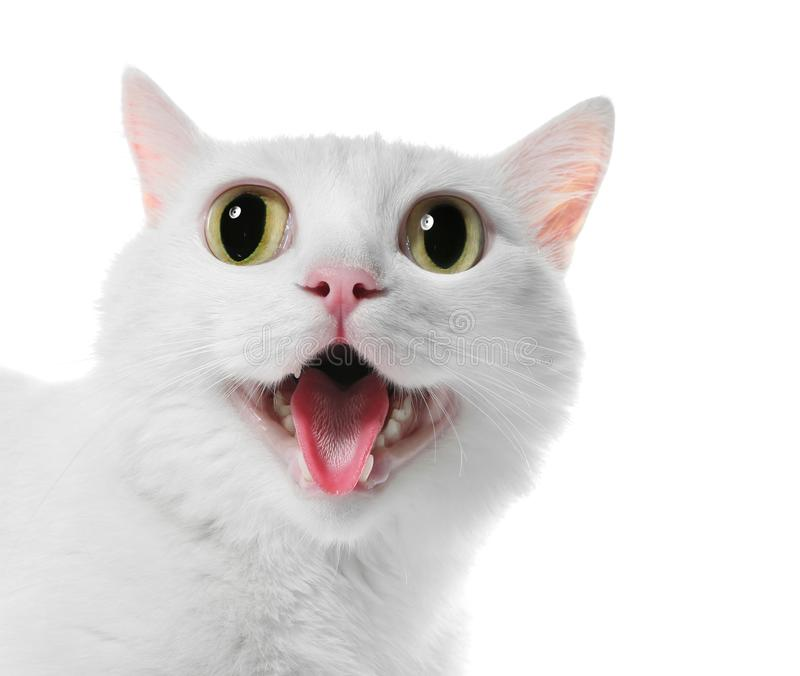 Funny cat with big eyes on white background. stock photography
