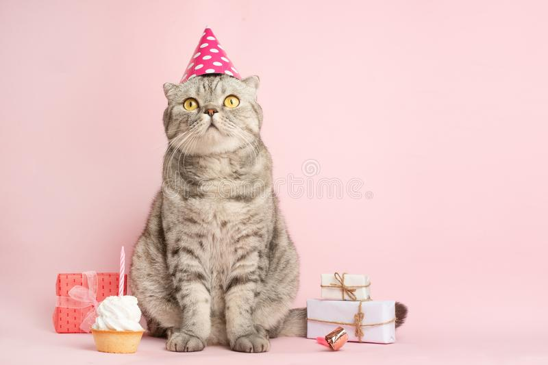 Funny cat in a cap celebrates birthday, on a pink background.  stock photos