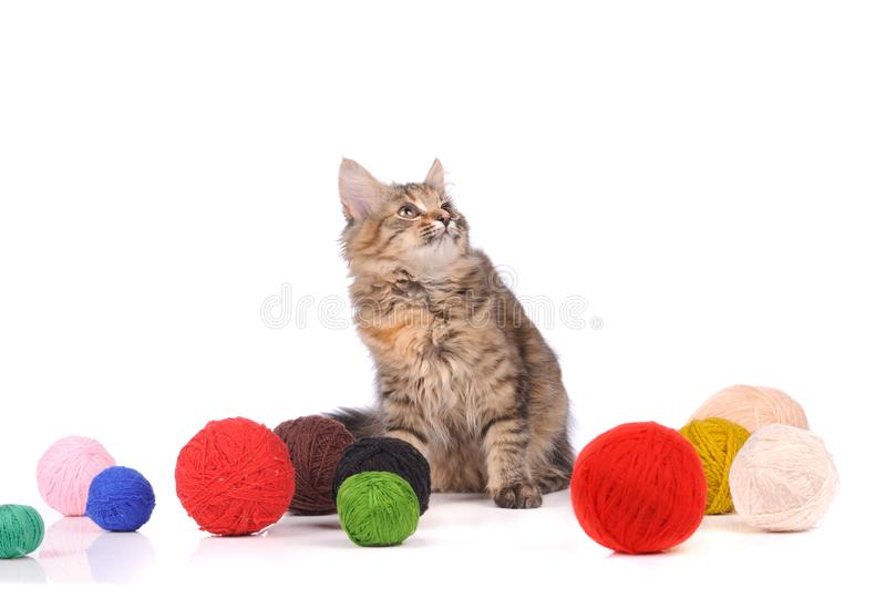 funny cat with clew isolated on white stock images