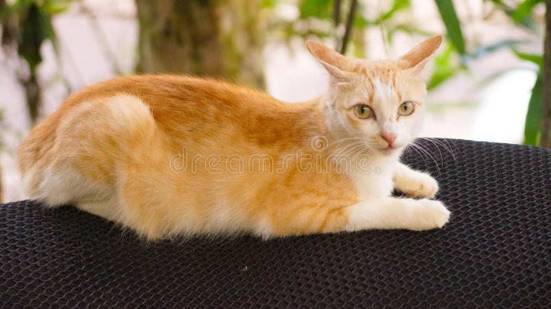 Funny cat. royalty free stock images