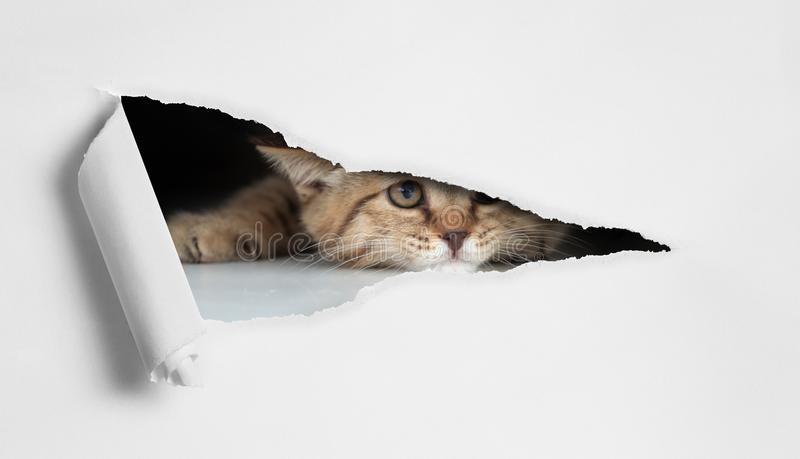 Funny cat looking through hole in paper isolated royalty free stock photo