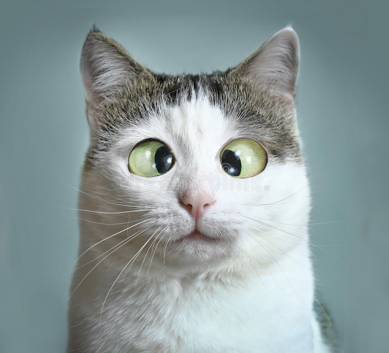 Funny cat at ophtalmologist appointmet stock photography