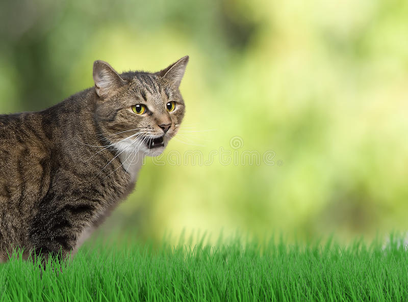 Funny cat outdoor at the grass background royalty free stock photos