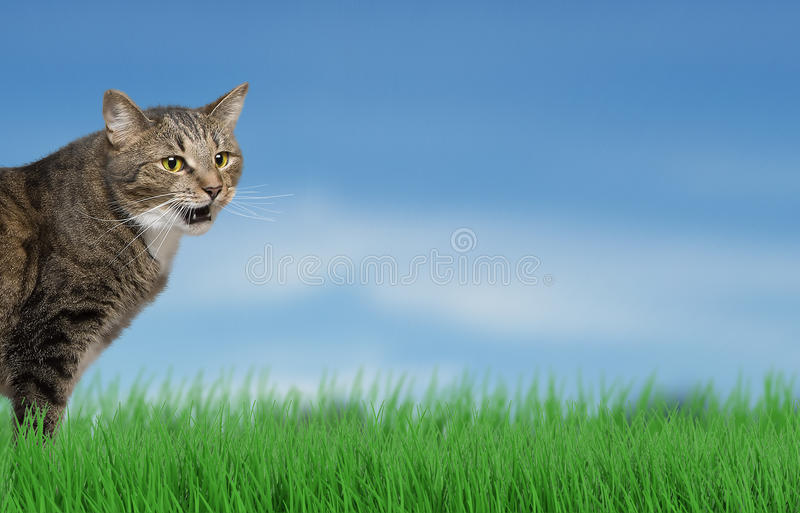 Funny cat outdoor at the grass background stock photography