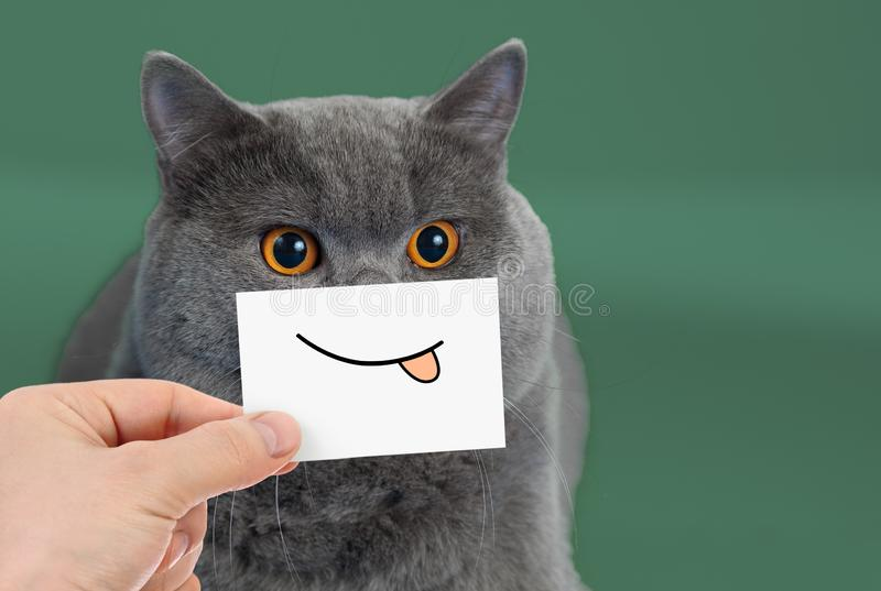 Funny cat portrait with smile and tongue royalty free stock images