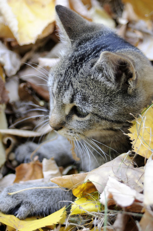 funny cat resting leaves royalty free stock photo