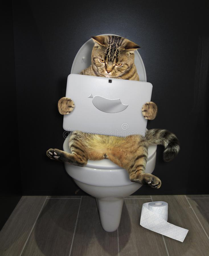 Cat with a laptop on the toilet royalty free stock photo