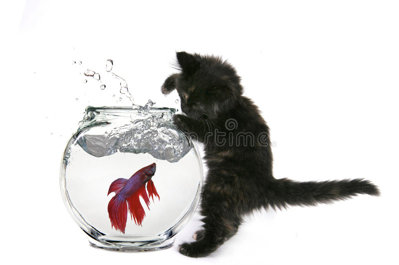 Funny Cat Trying to Catch royalty free stock photos
