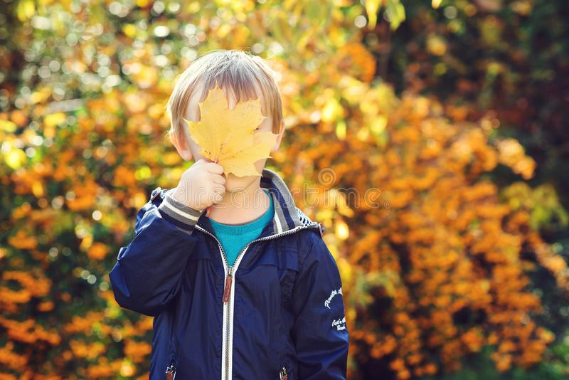 Funny child hide his face behind a maple leaf. Cute little boy playing with fallen leaves in city park. Autumn time. Autumn kids f royalty free stock image