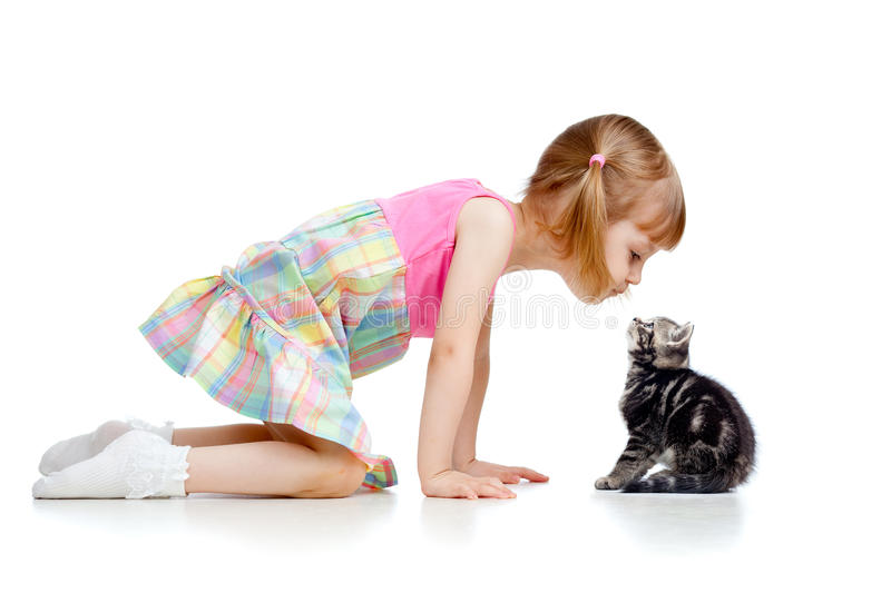 Funny child playing with Scottish kitten royalty free stock photo