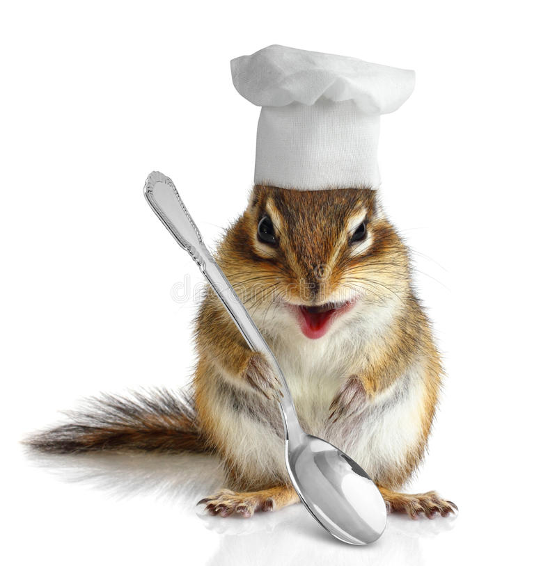 Funny chipmunk cook royalty free stock photo